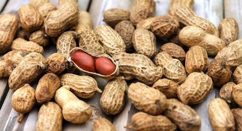 сорта арахиса.jpg