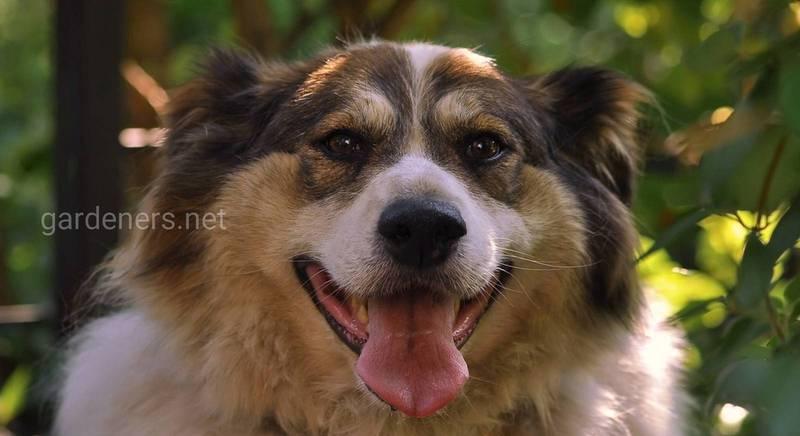 Двортерьер - собаки живущие рядом с нами