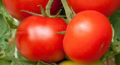5 способов подвязки помидоров.jpg