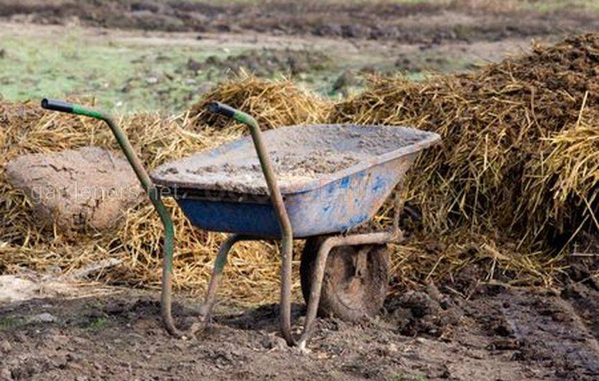 Нужно ли вносить удобрения осенью1