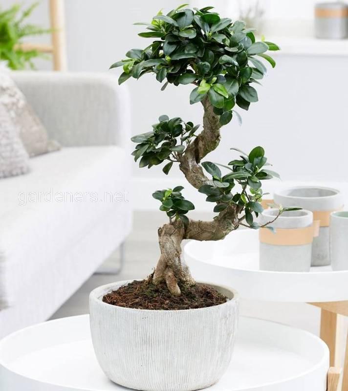 Які кімнатні рослини найпростіші в вирощуванні?
