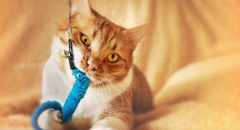 Разновидности кошачьих игрушек