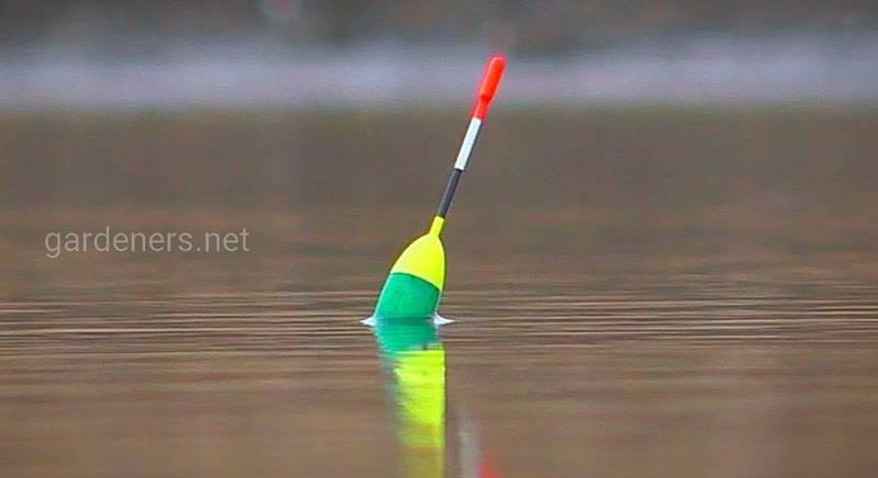 Как правильно подобрать поплавок