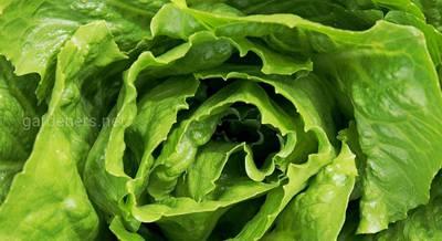 ТОП-18 разновидностей салата