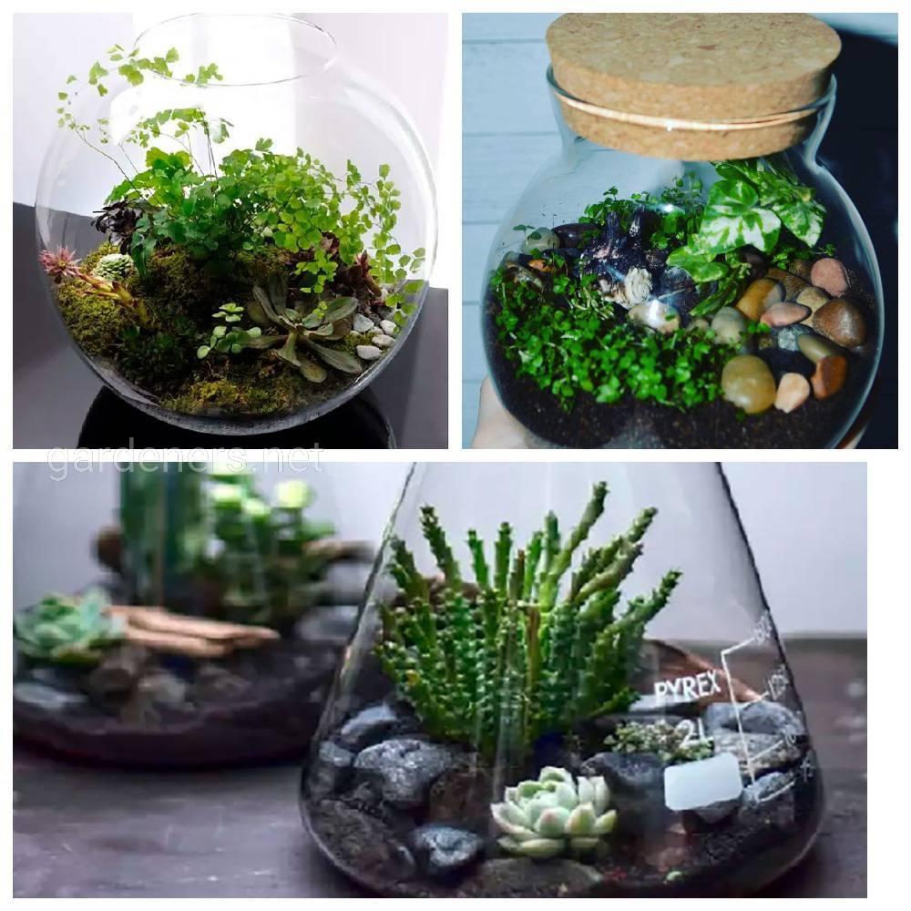 растения для бутылочного сада