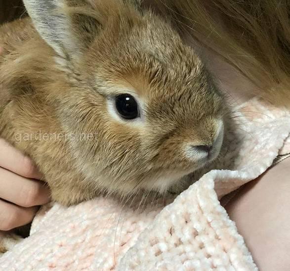 Навчання ручного кролика охайності