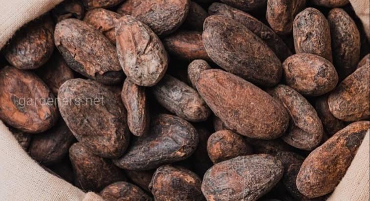 Мистецтво шоколаду Meetty