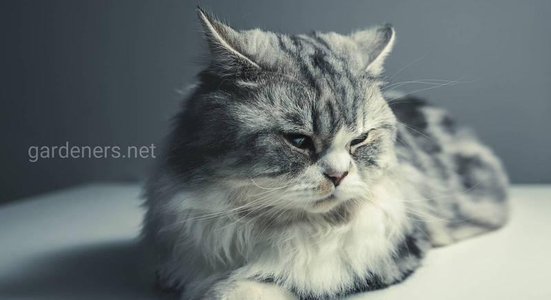Выбираем породу кота для разведения: какая лучше