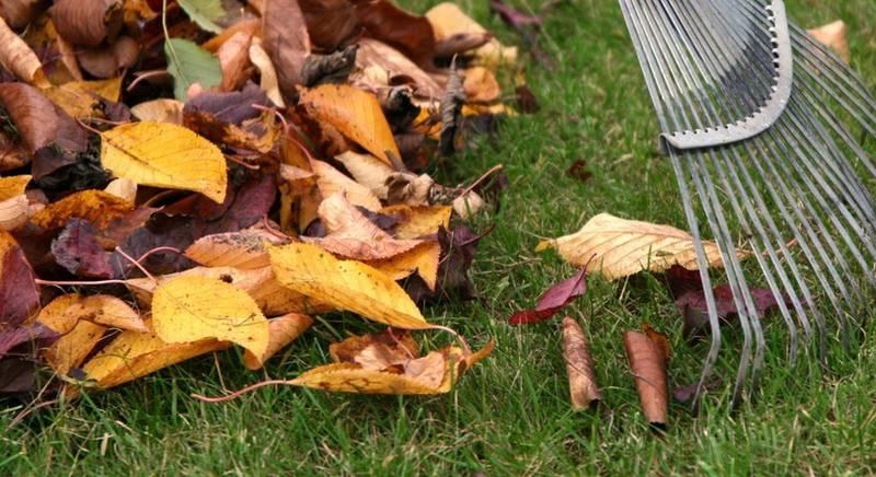 Использование опавшей листвы с пользой для растений и почвы. Делаем компост!