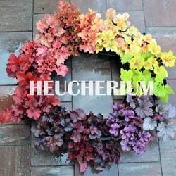 Heucherium.eu