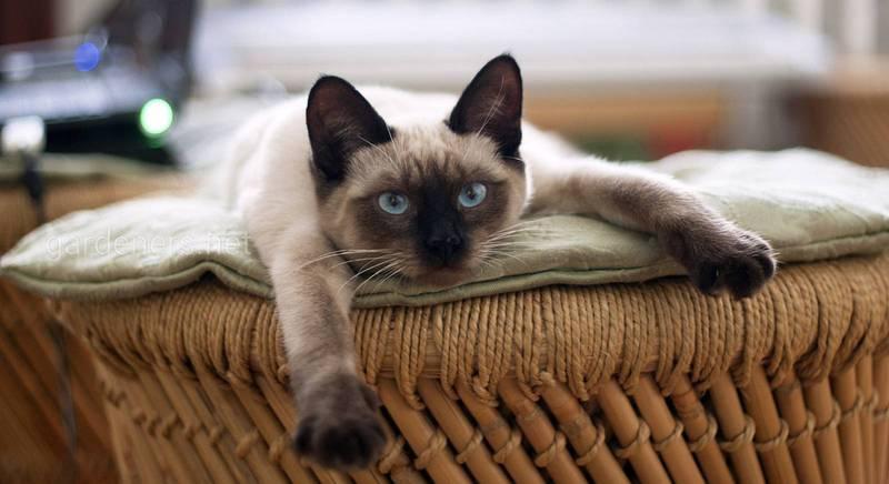 ТОП-10 кормів для кішок із урахуванням віку