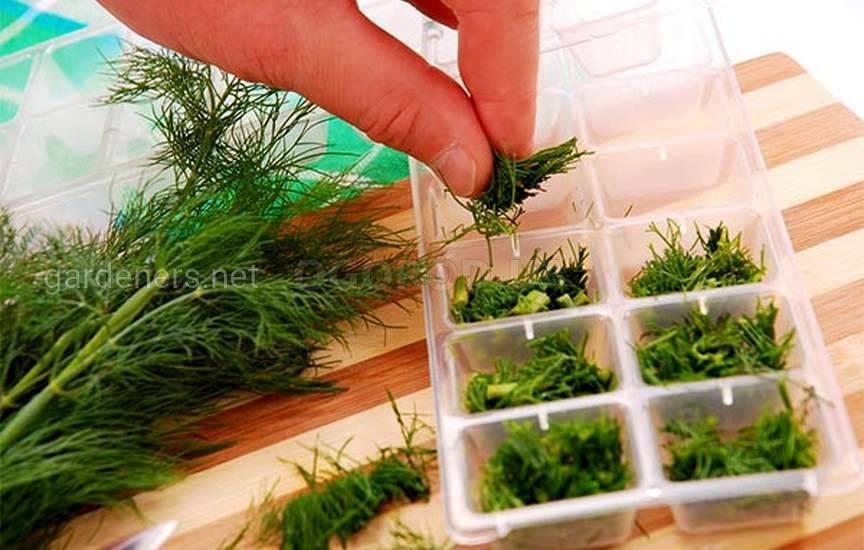 Способы замораживания зелени