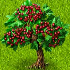 Питомник растений Калина-Брест  Семьянихин А.П. ИП