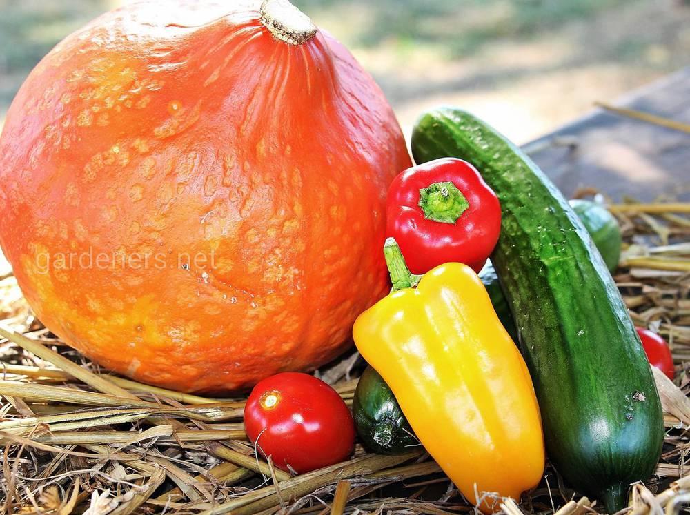 тыквенный салат с овощами и зеленью
