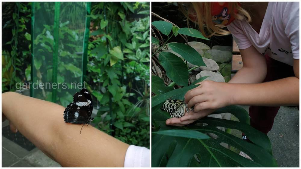 бабочки садятся на посетителей
