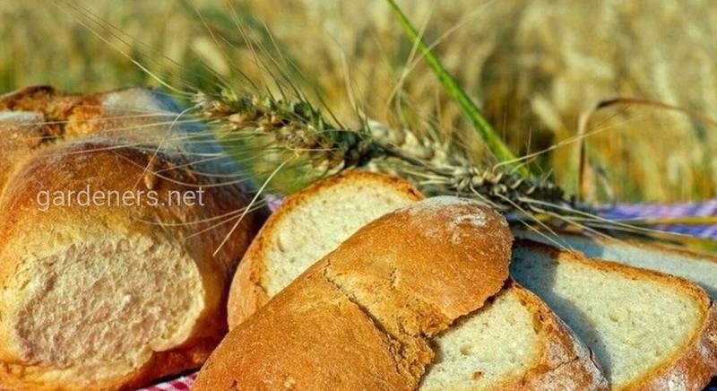 10 цікавих фактів про хліб