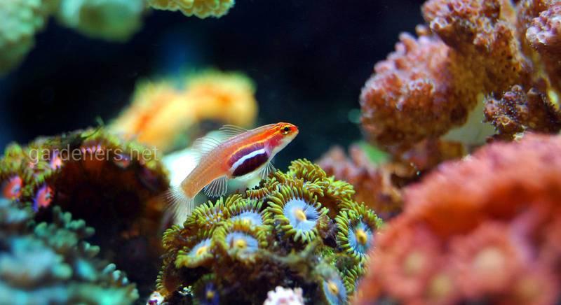 Как запустить новый аквариум