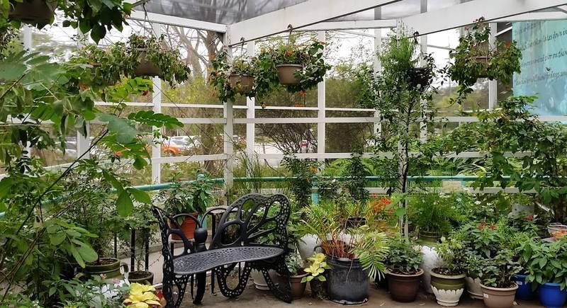 зимний сад.jpg