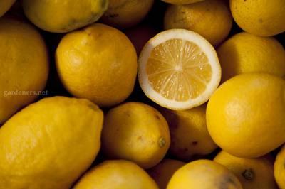 Lemons_for_sale.jpg