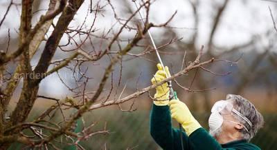 ТОП-6 самых острых вопросов про опрыскивание плодовых деревьев