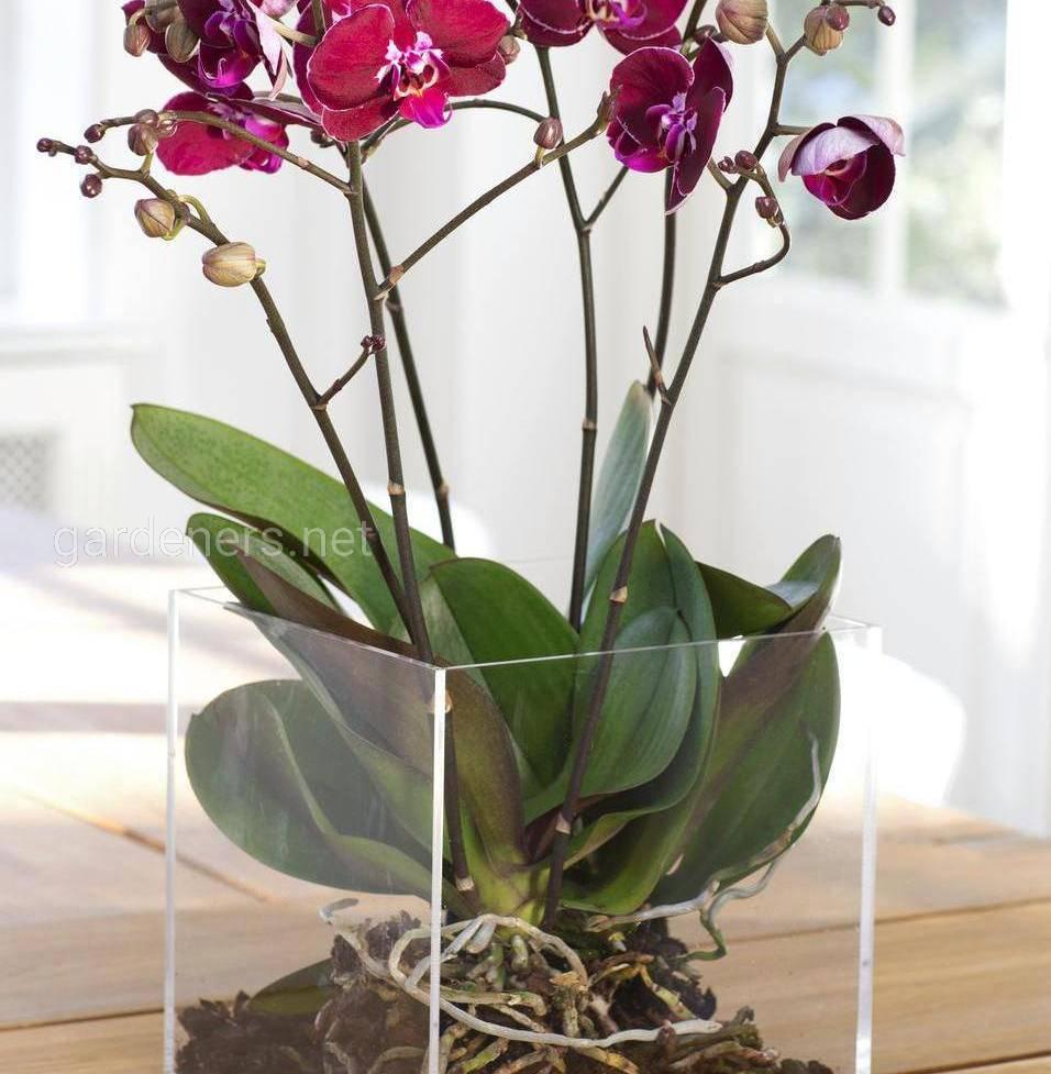 орхидея в стеклянной колбе
