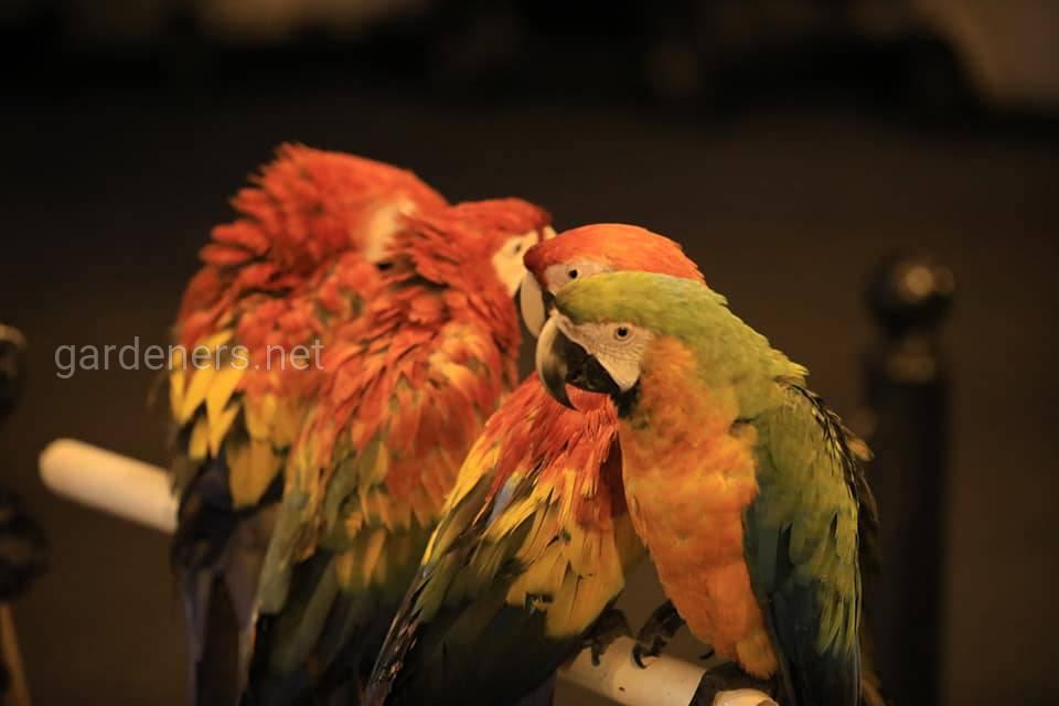Попугаи. Карибские Острова