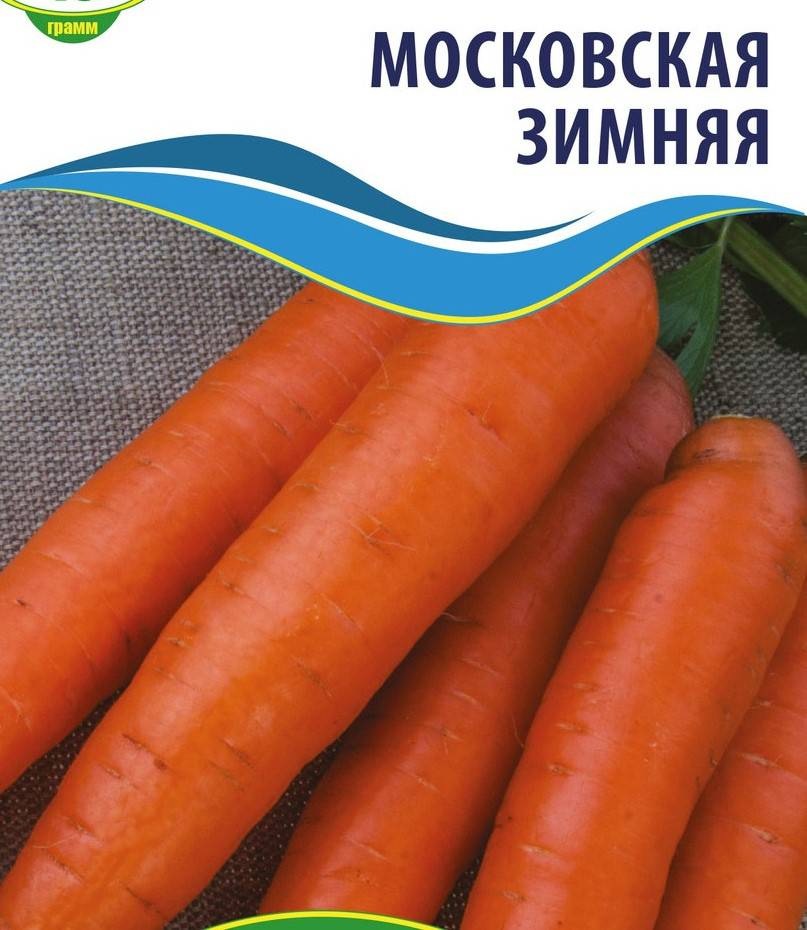 Сорт моркови Московская Зимняя