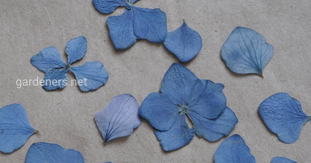 Варианты засушивать цветы