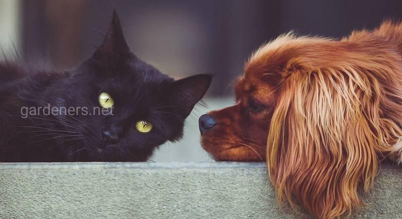 Календарь прививок для кошек, собак, хорьков и декоративных кроликов как единственный способ защиты от болезней