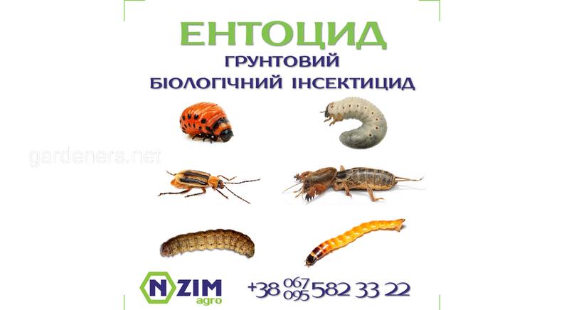 Энтоцид ENZIM - почвенный инсектицид - Обзор, цена, где купить