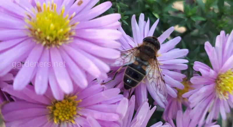 Как работа влияет на продолжительность жизни пчел
