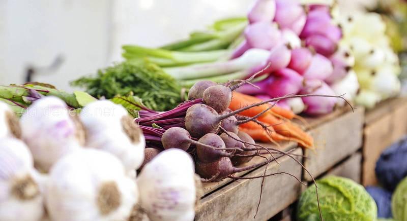 Топ ошибок при выращивании овощей