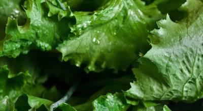 lettuce-792059_1280.jpg