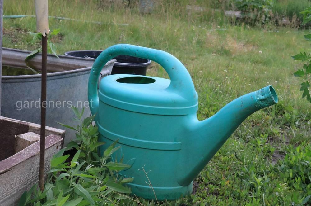 Как сократить расход воды, но при этом напоить растения вдоволь