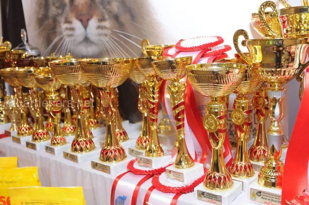 Золота кішка