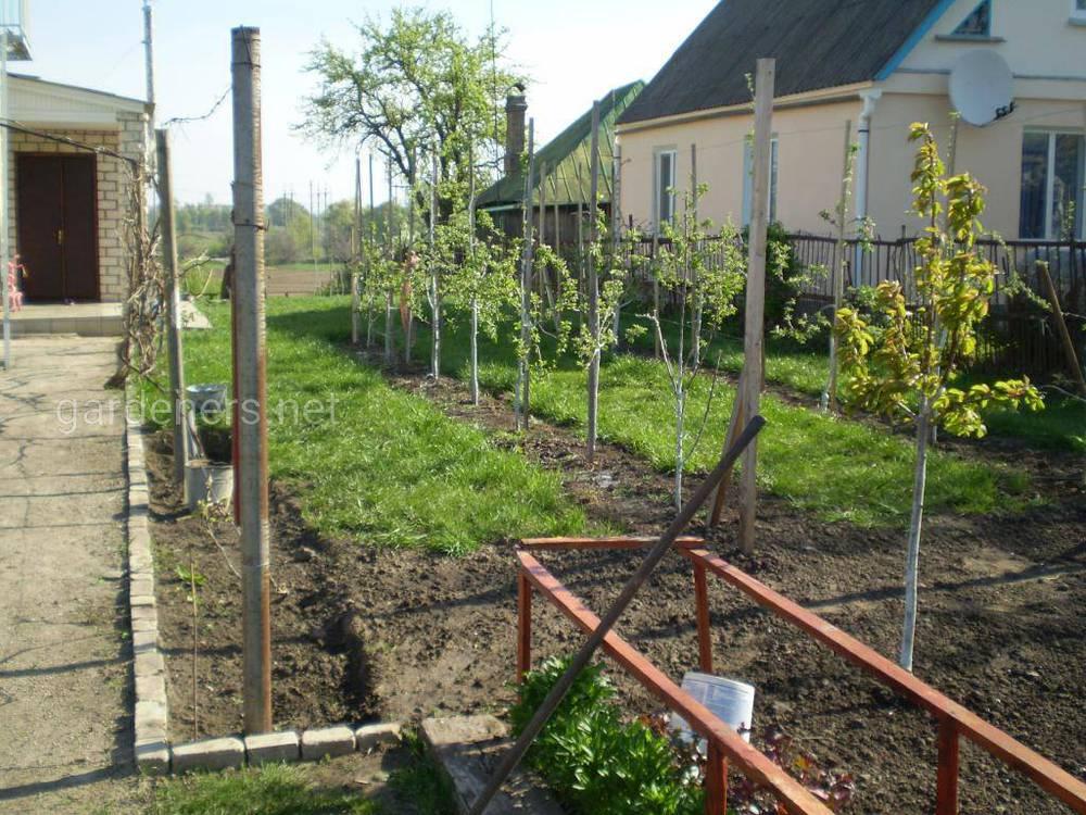 Правила малодоглядного саду
