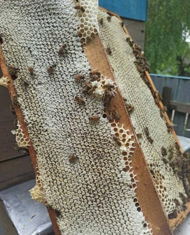 Мед (мёд)