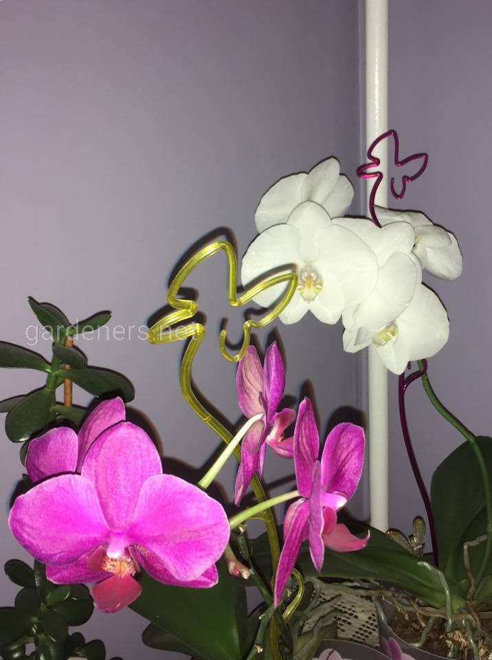 Орхидеи. фото Марианна Лякина
