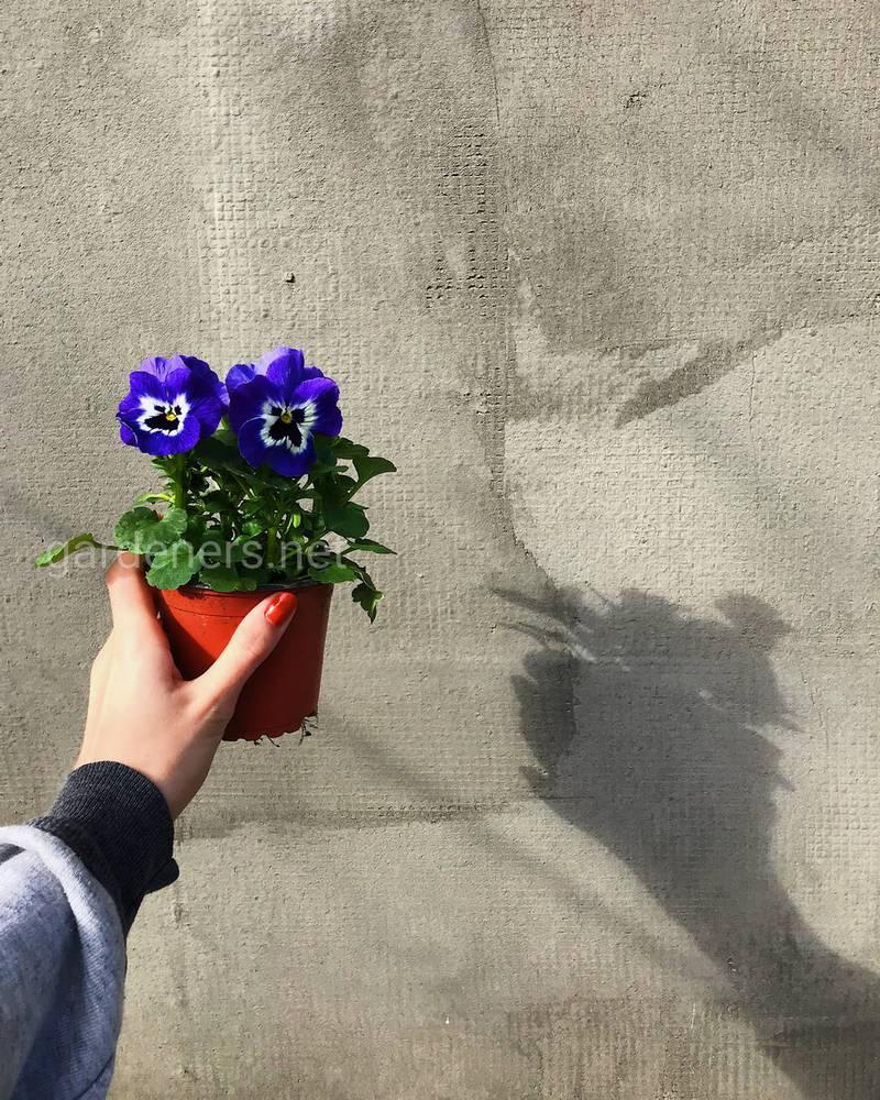 Лучшие растения для озеленения