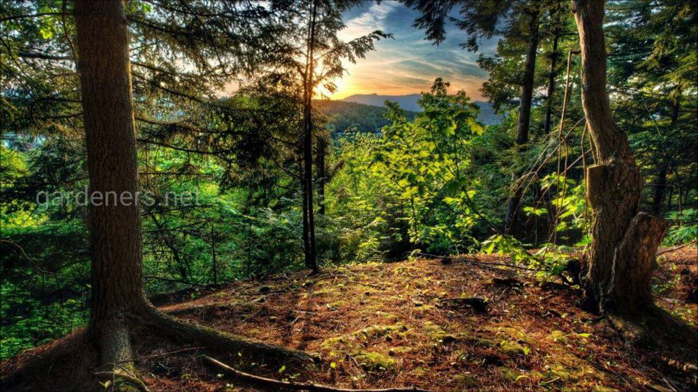 Красивые леса