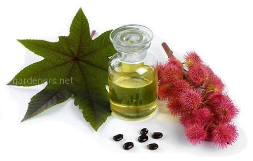 Как приготовить мацерат - растительное масло?