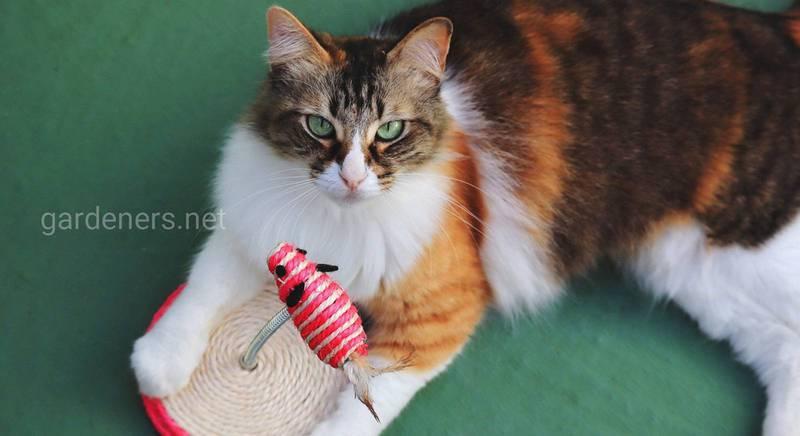 Делаем игрушки для кошек своими руками