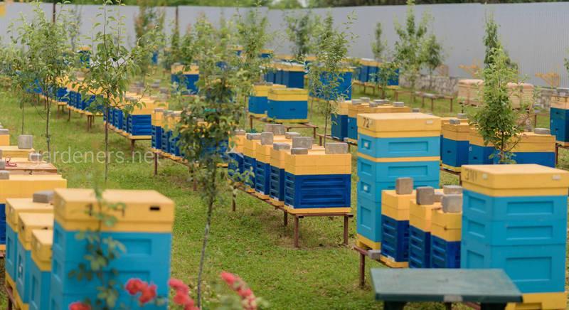 Правильное размещение и обустройство пасеки — предотвращение болезней пчел