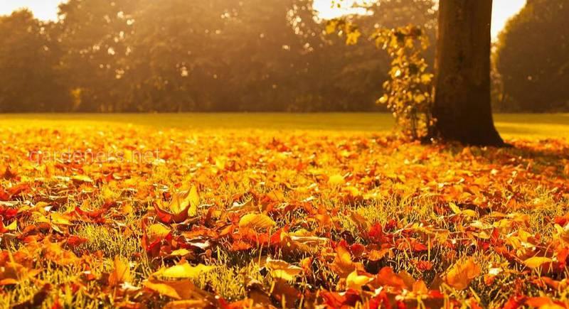 дерево осень.jpg