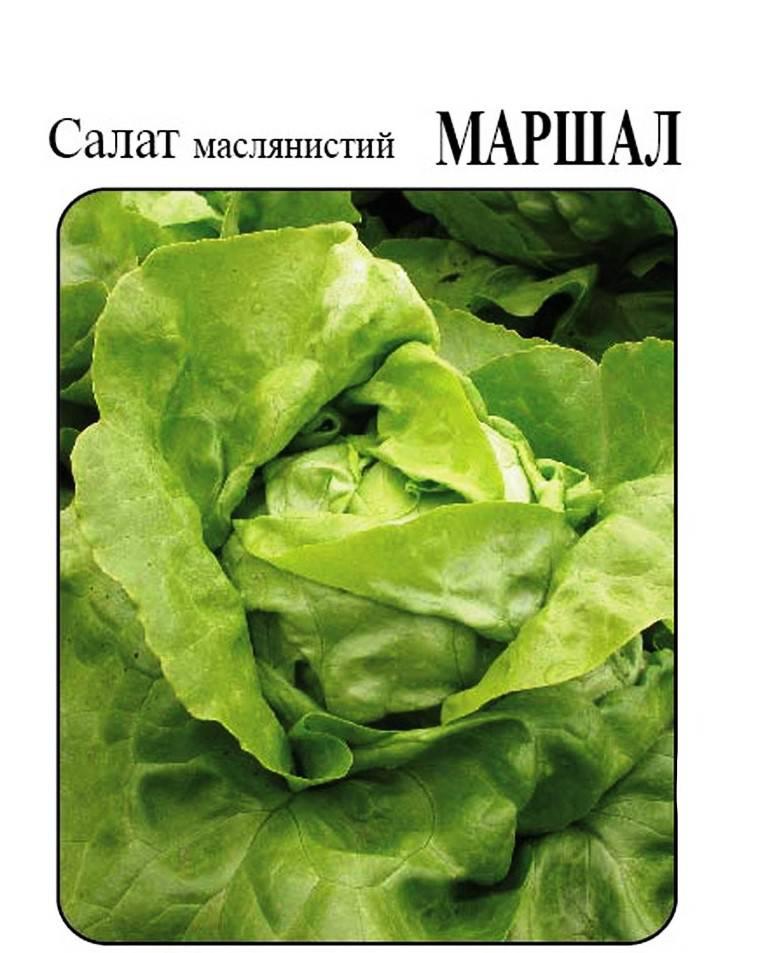 Сорт салата Маршал