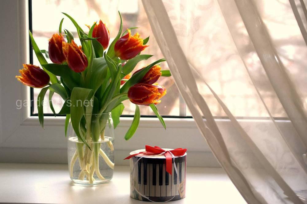 Как можно сохранить срезанные тюльпаны