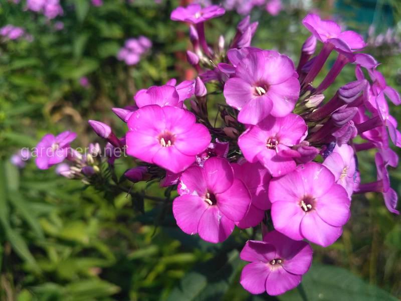 Календар догляду за квітами. Частина 2