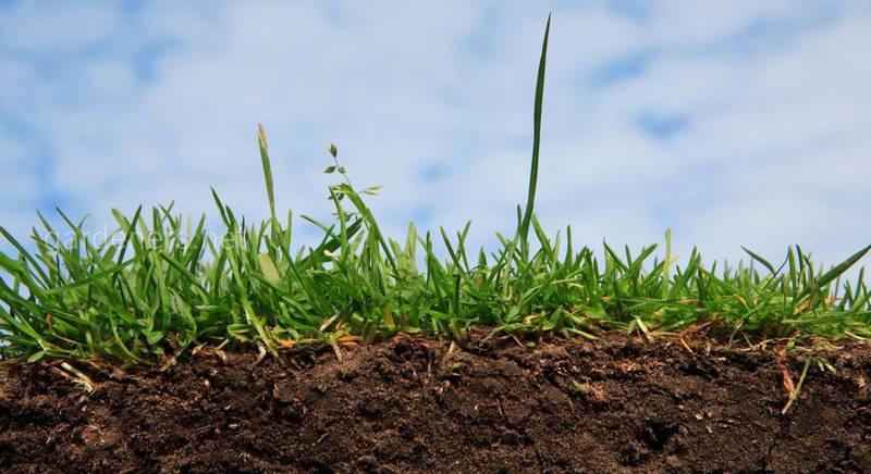 Как уменьшить азот в почве