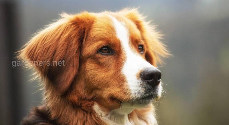 Когда у собаки бастуют почки — диагностика болезни