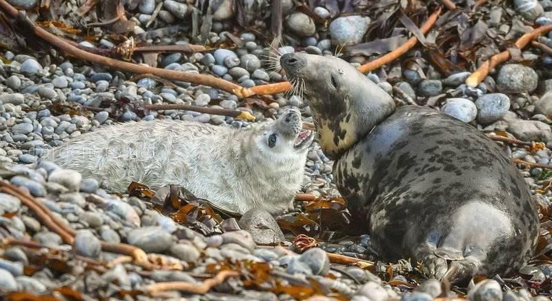 Рыболовные снасти — смертельная угроза для морских обитателей